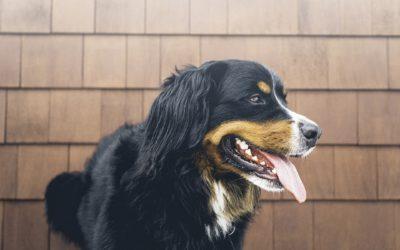 WOW CAN te recomienda los principales restaurantes Pet Friendly en Bogotá