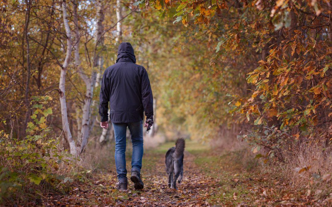 ¿Donde pasear a mi perro en Bogotá?