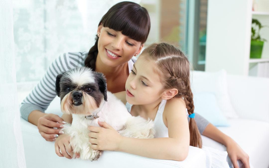 ¿Pensando en añadir un perro a tu familia?
