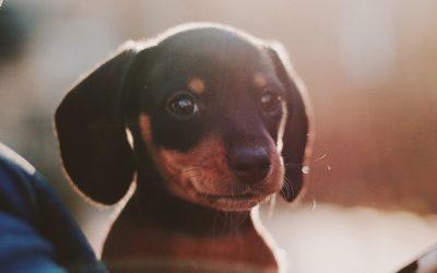 Convivir con tu perro te alarga la vida
