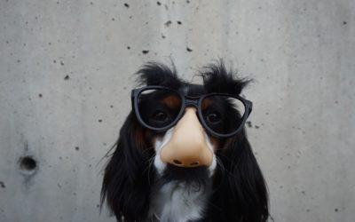 ¿Es bueno ó malo disfrazar a mi perro?