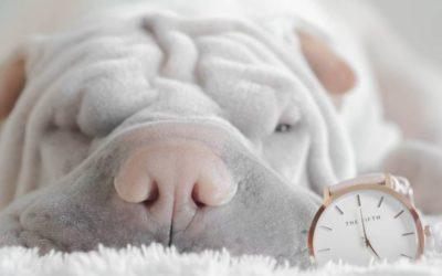 ¿Mi perro también tiene sueños y pesadillas?